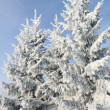Group of snowly trees. — Stockfoto