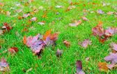 Winter leafs. — Stock Photo