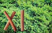 Fir tree. — Stock Photo