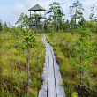 Stock Photo: Paths in bog.
