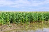 Översvämning på fältet. — Stockfoto