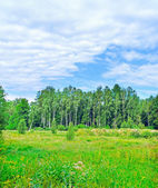 Fringe of a forest. — Stock Photo