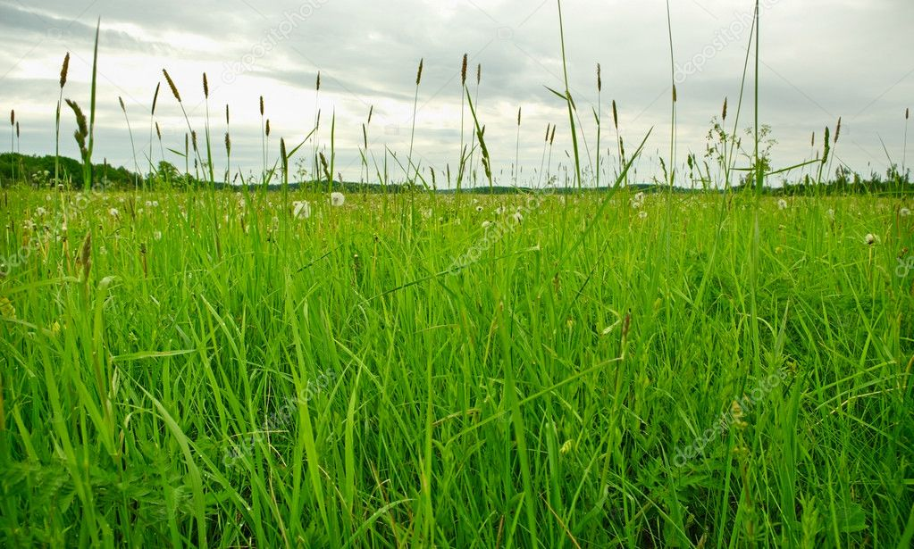 Green pasture grass cloudy day. — Stock Photo #10521429