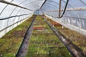 Nursery for plants. — Stock Photo