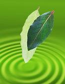 2 つの緑を葉します。. — ストック写真