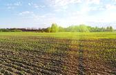Soluppgång över fältet. — Stockfoto