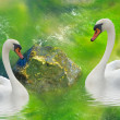 Royalty-Free Stock Photo: Cuple of swans.