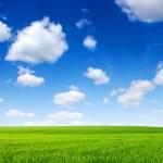 字段和天空 — 图库照片