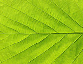 Yaprak dokusu — Stok fotoğraf