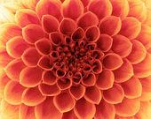 Abstrakt blomma — Stockfoto