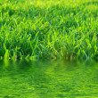 Green lawn — Stock Photo #10366307