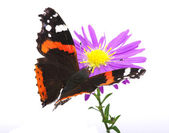 Butterfly — Stock Photo