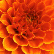 Stock Photo: Abstract flower