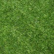 Texture green lawn - Stock Photo
