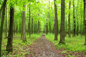 Verde foresta — Foto Stock
