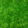 Background green lawn — ストック写真