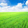Field and white clouds — Stock Photo #8096189
