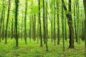 Verte forêt — Photo