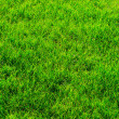Green lawn — Stock Photo #8503026