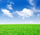 Campo e nuvens brancas — Foto Stock