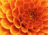 抽象的な花 — ストック写真