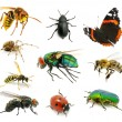 Set of insects - Stock Photo