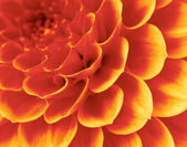 Abstract petals — Stock Photo