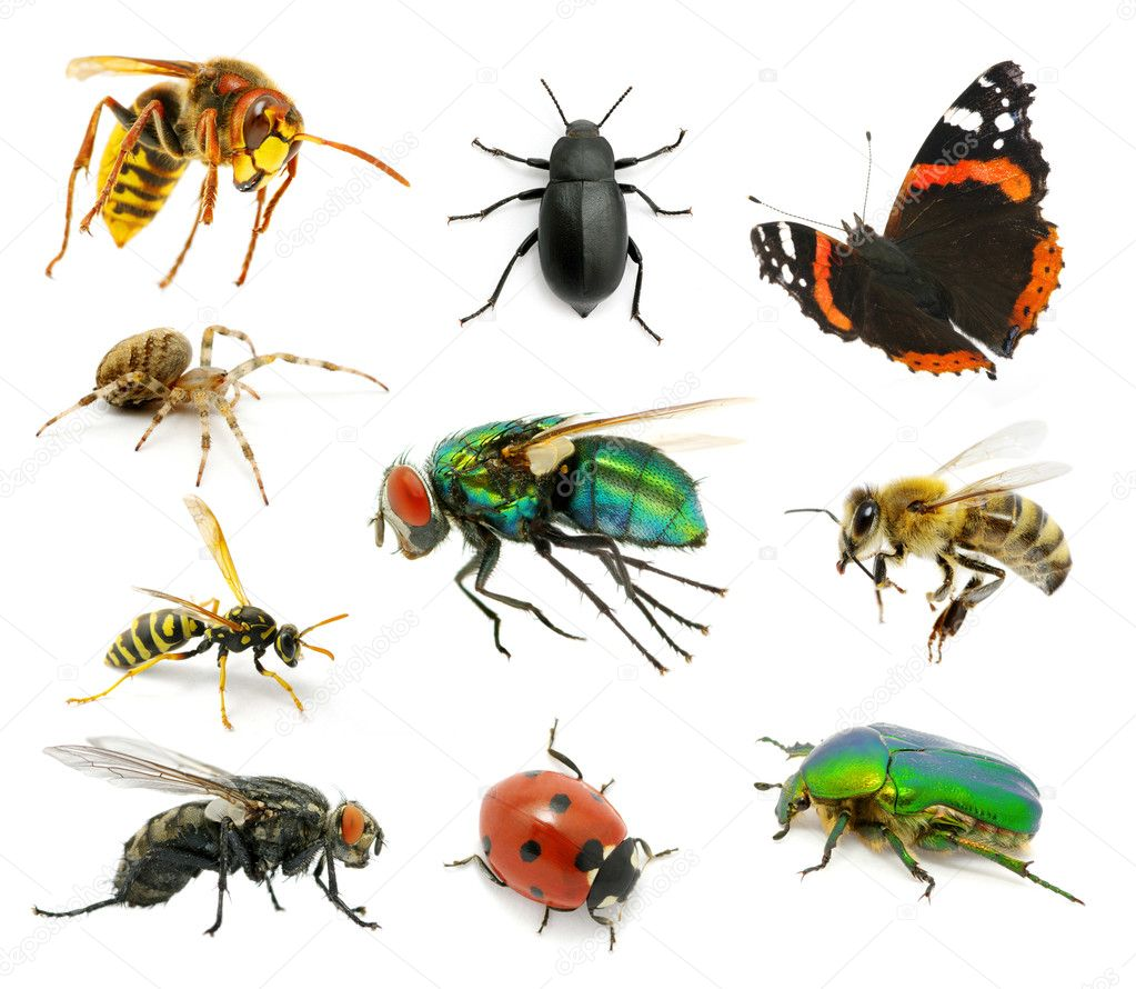 Set of insects on white — Stock Photo #9084915
