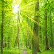 Sun beam in forest — Stockfoto #9191625