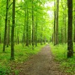 Green forest - Stockfoto
