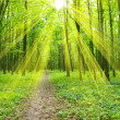 Stock Photo: Beam in forest