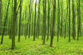 Ormanda ilkbahar — Stok fotoğraf