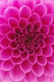 抽象花 — 图库照片