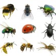 Set of insects — Stock Photo #9313807