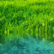 Green lawn — Stock Photo #9314011