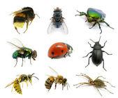 Conjunto de insetos — Foto Stock