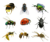 Set of insects — 图库照片