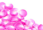 粉红色的玫瑰花瓣 — 图库照片