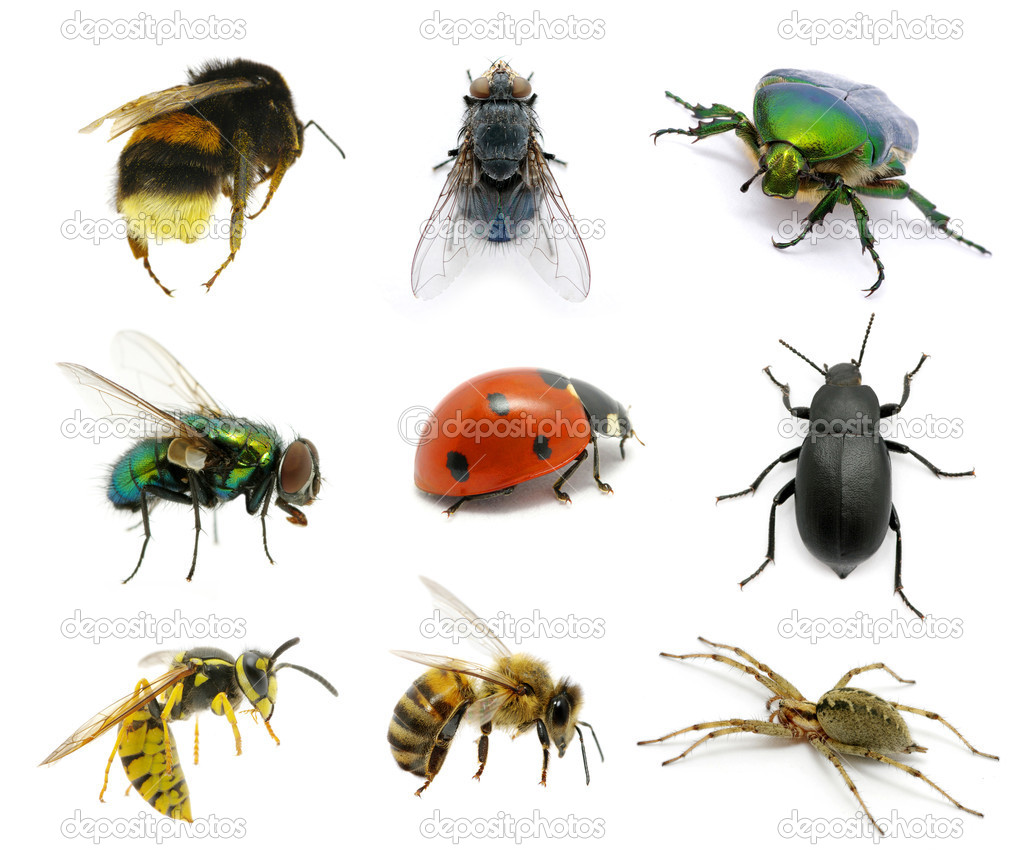 Set of insects on white Insects