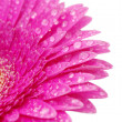 Gerbera flower — Stock Photo #9421476