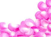 Roze roze bloemblaadjes — Stockfoto