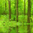 Green forest - Foto Stock