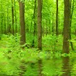 Green forest -  