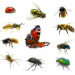 Set of insects — Stock Photo #9564913