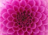 Abstract petals — Stock Photo