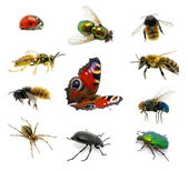 Set of insects — Stock Photo