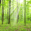 Beam in forest — Stockfoto #9822135