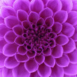 Abstract flower — Stock Photo
