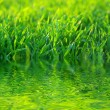 Background green lawn — Stock Photo #9920516