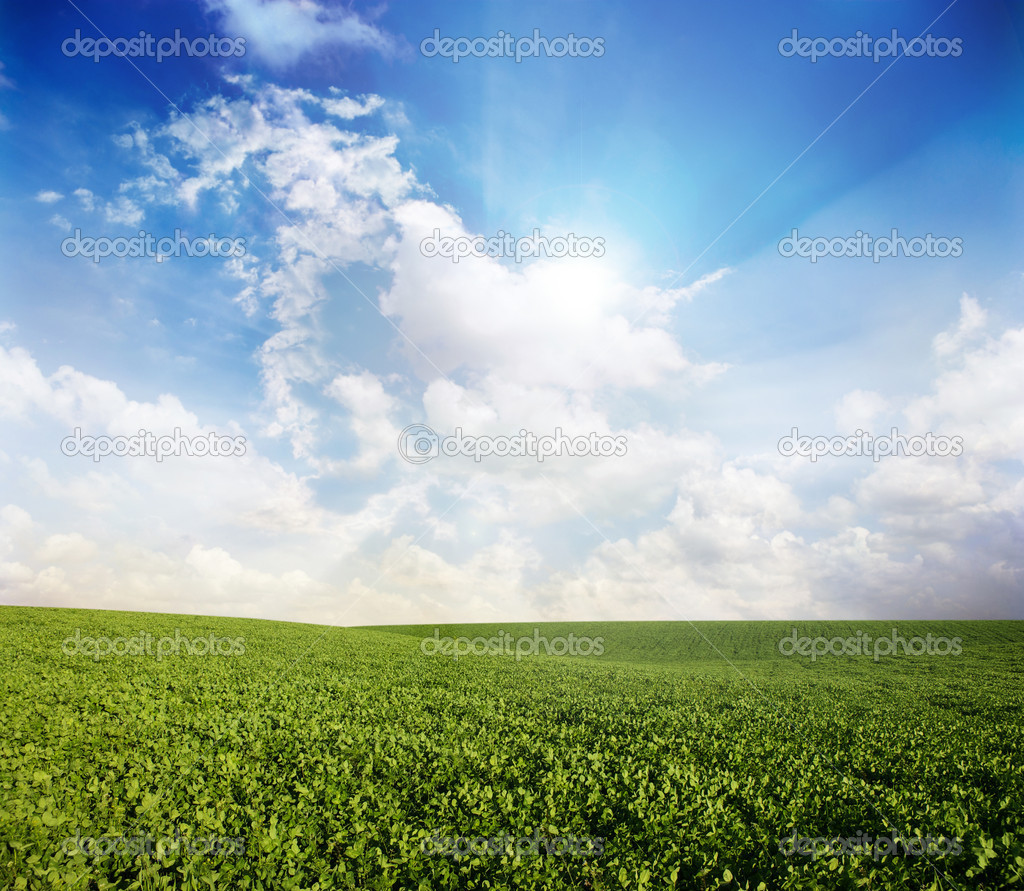 Green meadow under blue sky with clouds — Stock Photo #8527834